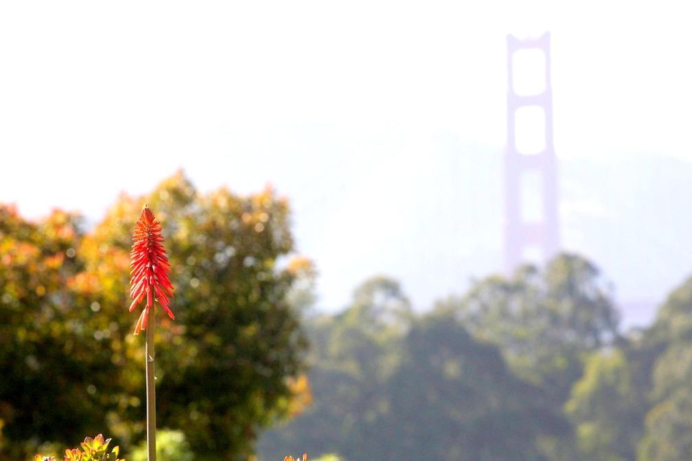 flower-571632_1280